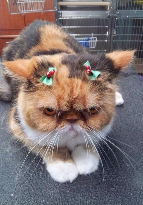 Funny cats - part 99 (40 pics + 10 gifs), cat pictures, angry cat