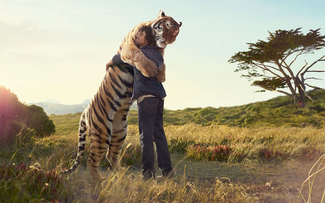 Man Hugging Huge Tiger Wild Life HD Wallpaper