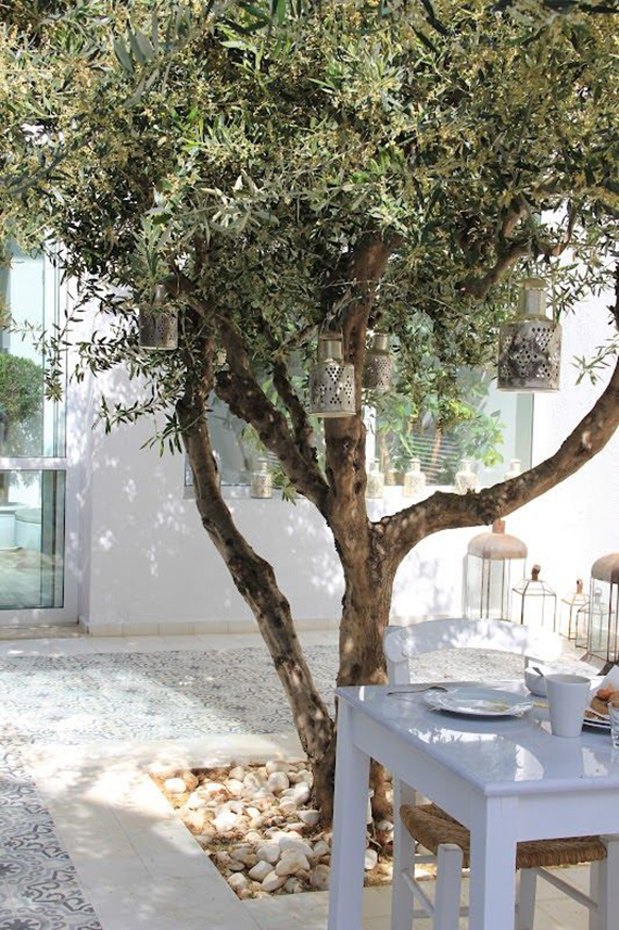 Mediterranean yard with olive tree
