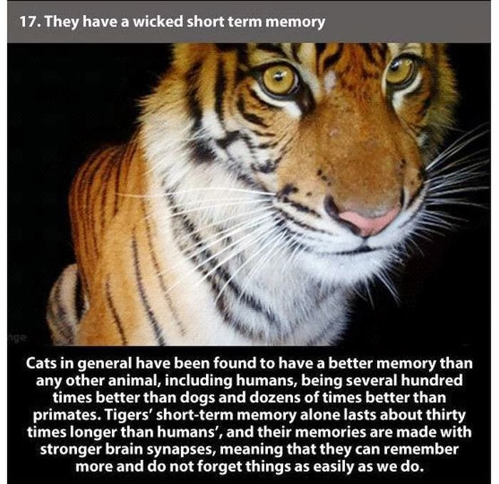 22 Amazing Facts About Tigers ~ Damn Cool Pictures