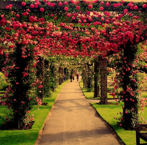 why sometimes ive believed as many as six impossible things before breakfast alice in wonderland lewis carroll - Alice In Wonderland Garden