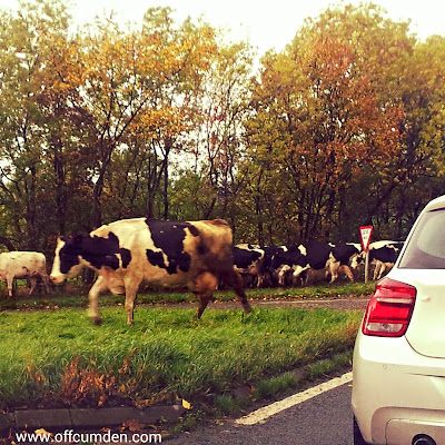 countryside traffic jam