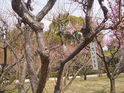 兵庫県・伊丹市 緑ヶ丘公園の梅 思いのまま