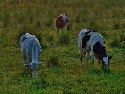 Morning Graze