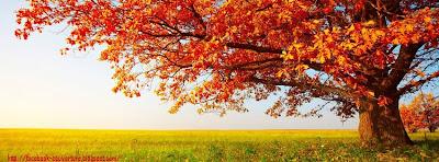 Couverture facebook feuilles d'automne