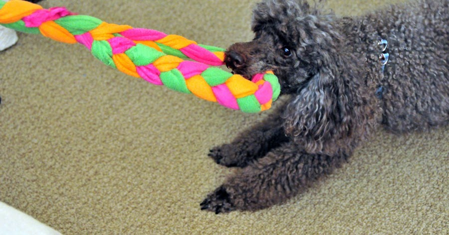 How To Make A Tug Toy For Your Dog