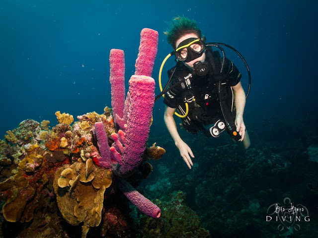 Bas Harts Diving Excursion