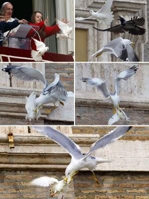 pomba é atacada por corvo e gaivota