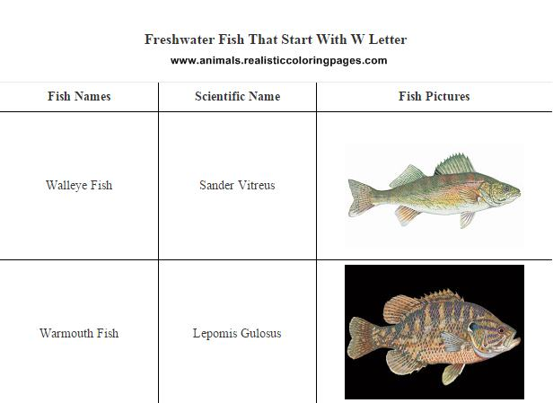 Freshwater fish that start with w letter animals name a to z for Names of fish