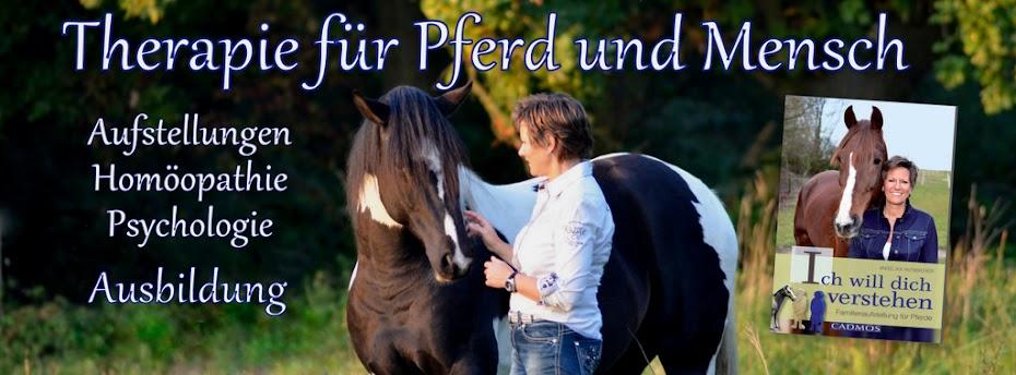 Blog für PferdeMenschen