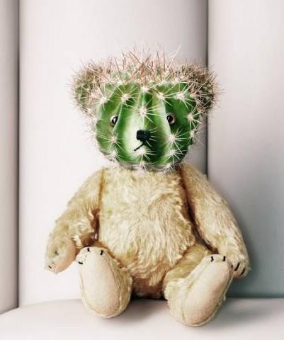 Ensom bamse med kaktus-hovede