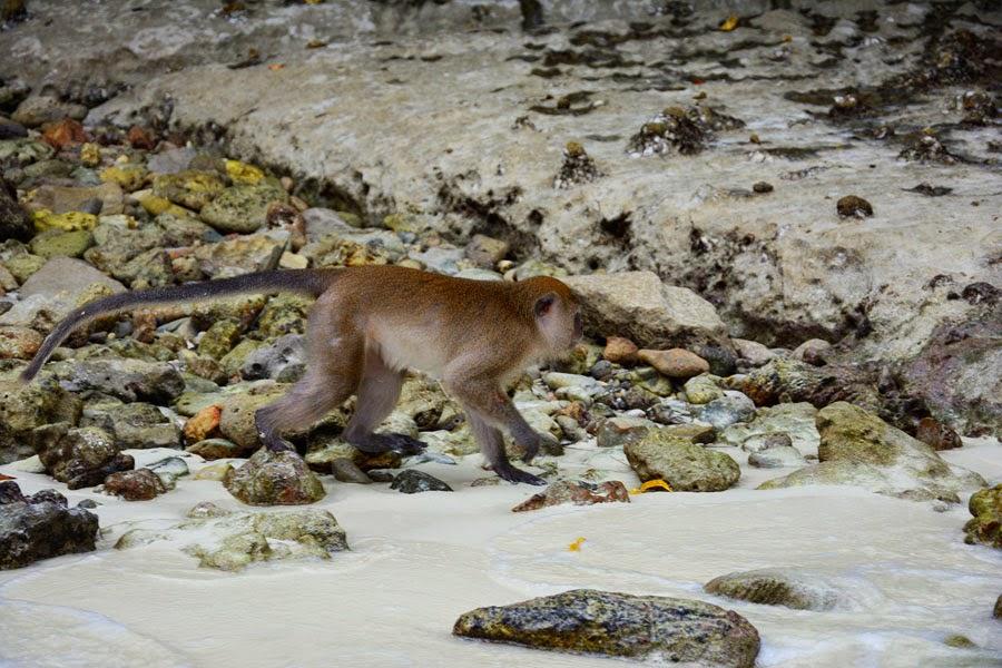 Monkey Beach na Koh Phi Phi w Tajlandii