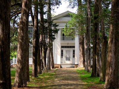 Cedar lined approach to Rowan Oak, The William Faulkner House, in Oxford, MS