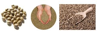 Manfaat biji fumayin atau hemp seeds