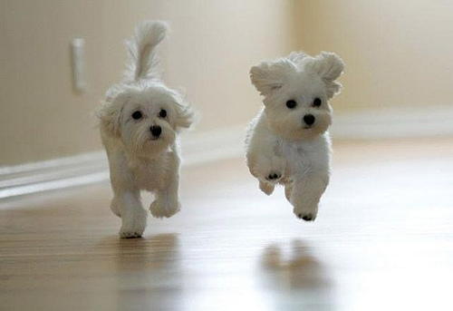 funny animals cute puppies