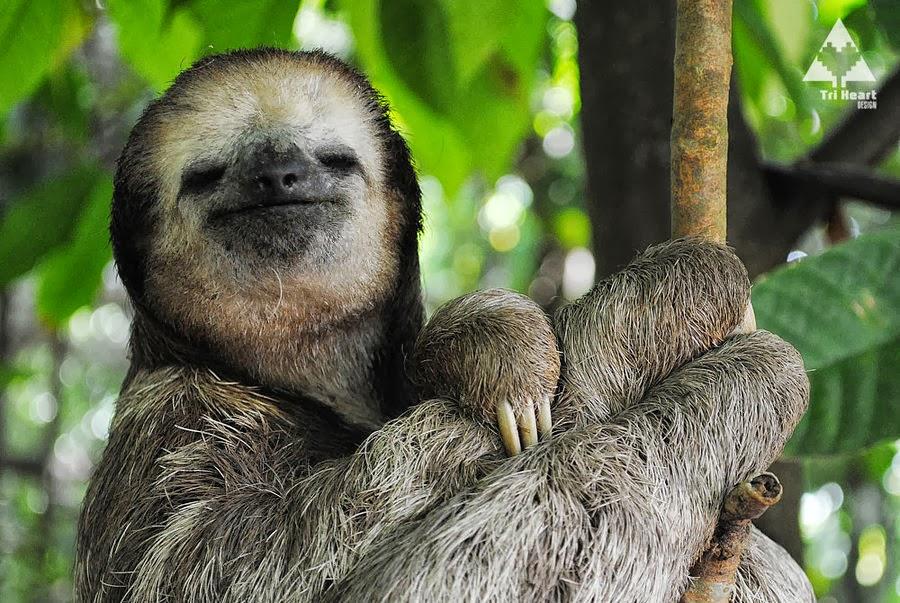 sloth save