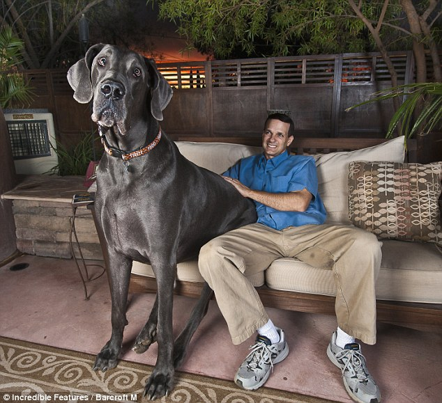 The Laughing Pet: Guinness World Record for tallest living dog - photo#2