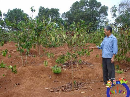 tưới nước cho cây khô hạn