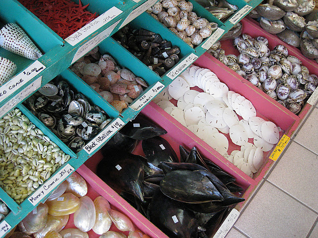 Starfish, sand dollars, and snail shells for sale at She Sells Sea Shells