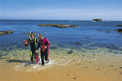 Snorkelling off Limestone Coast