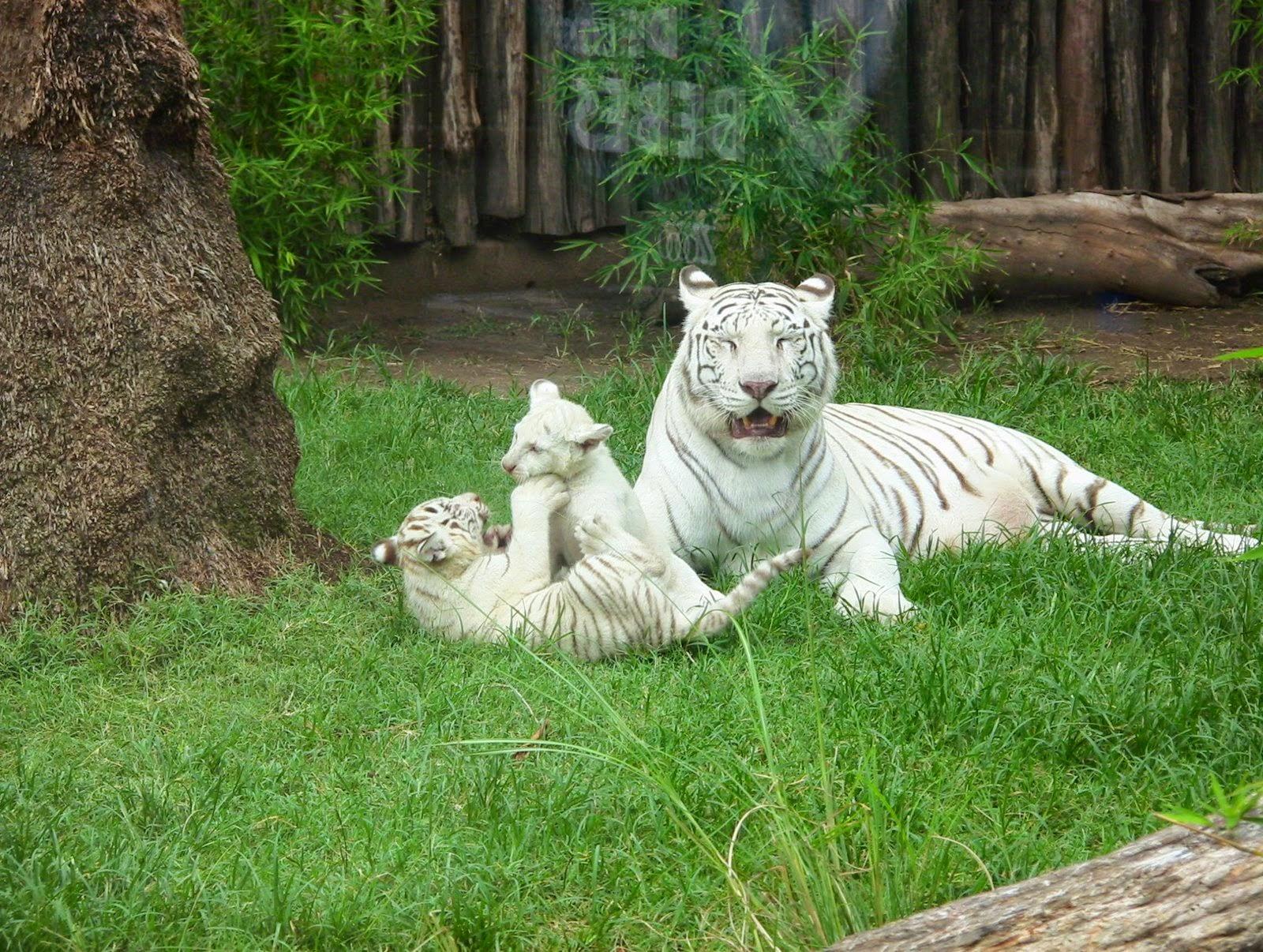 Qual é o maior zoológico do mundo?
