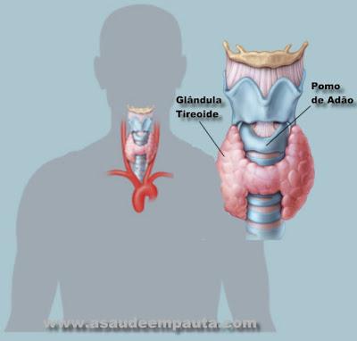 Glândula tireoide e seu posicionamento no corpo humano.
