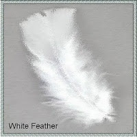 Fluffy white feather
