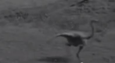 dinosaurio vivo real filmado