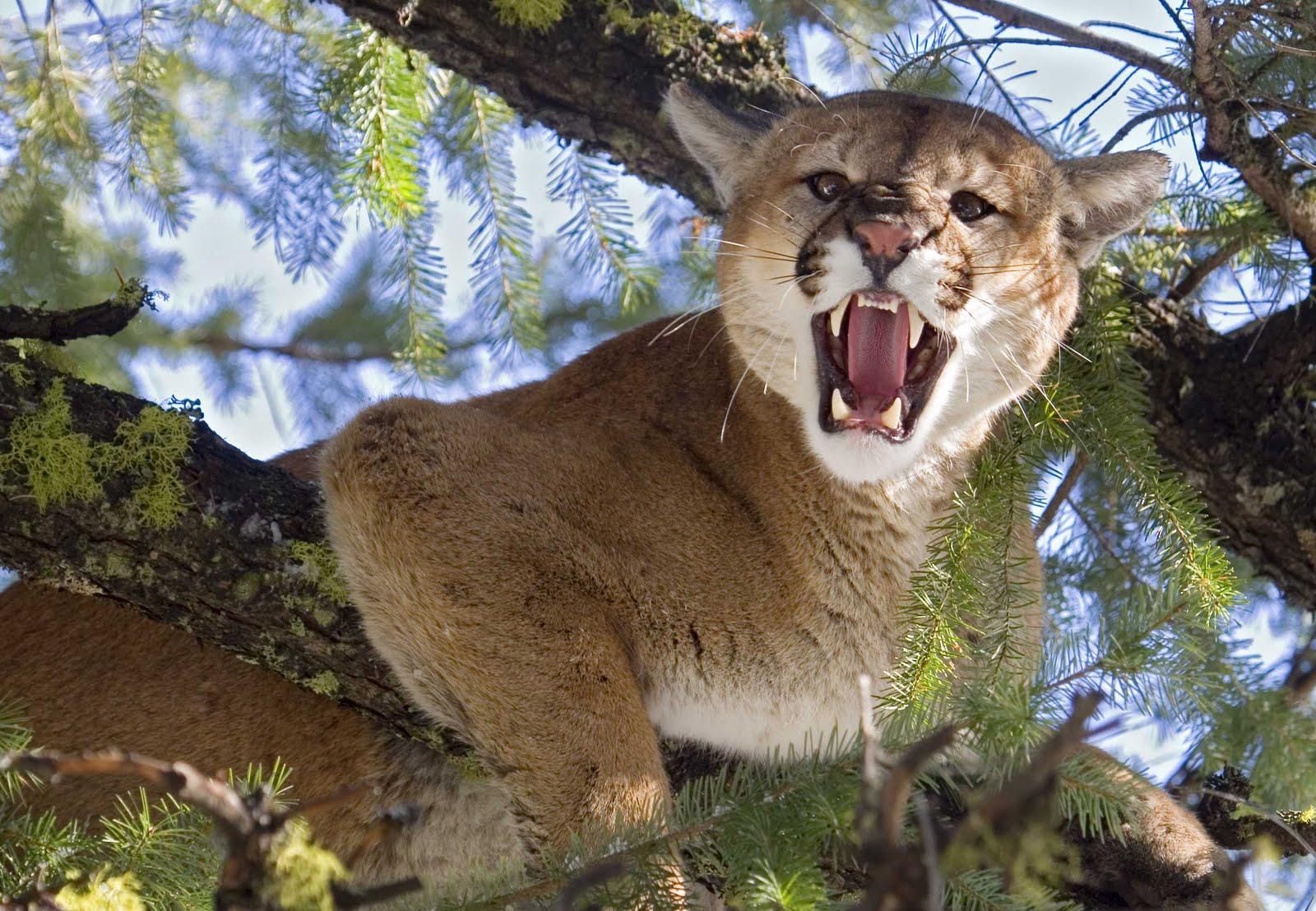 http://3.bp.blogspot.com/-gvWAFqL9ero/TcvqSdQVq8I/AAAAAAAABgw/SQNYAiiFuIU/s1600/Puma.jpg