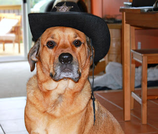 cowboy hat dog costume - turtlesandtails.blogspot.com