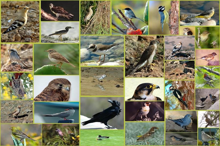 Actividades con aves sin salir de la ciudad. Ocio verde en Madrid. itinerarios ornitológicos, anillamiento, talleres en Madrid.