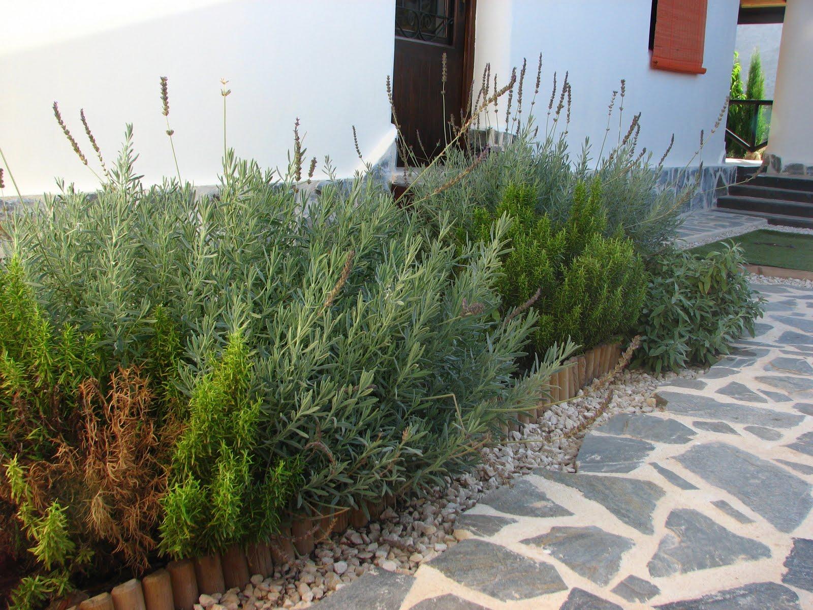 Nuestra casa de paja el patio de mi casa for Jardineras para patio casa