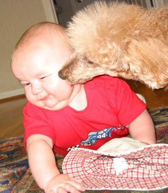 Funny Dog and Baby