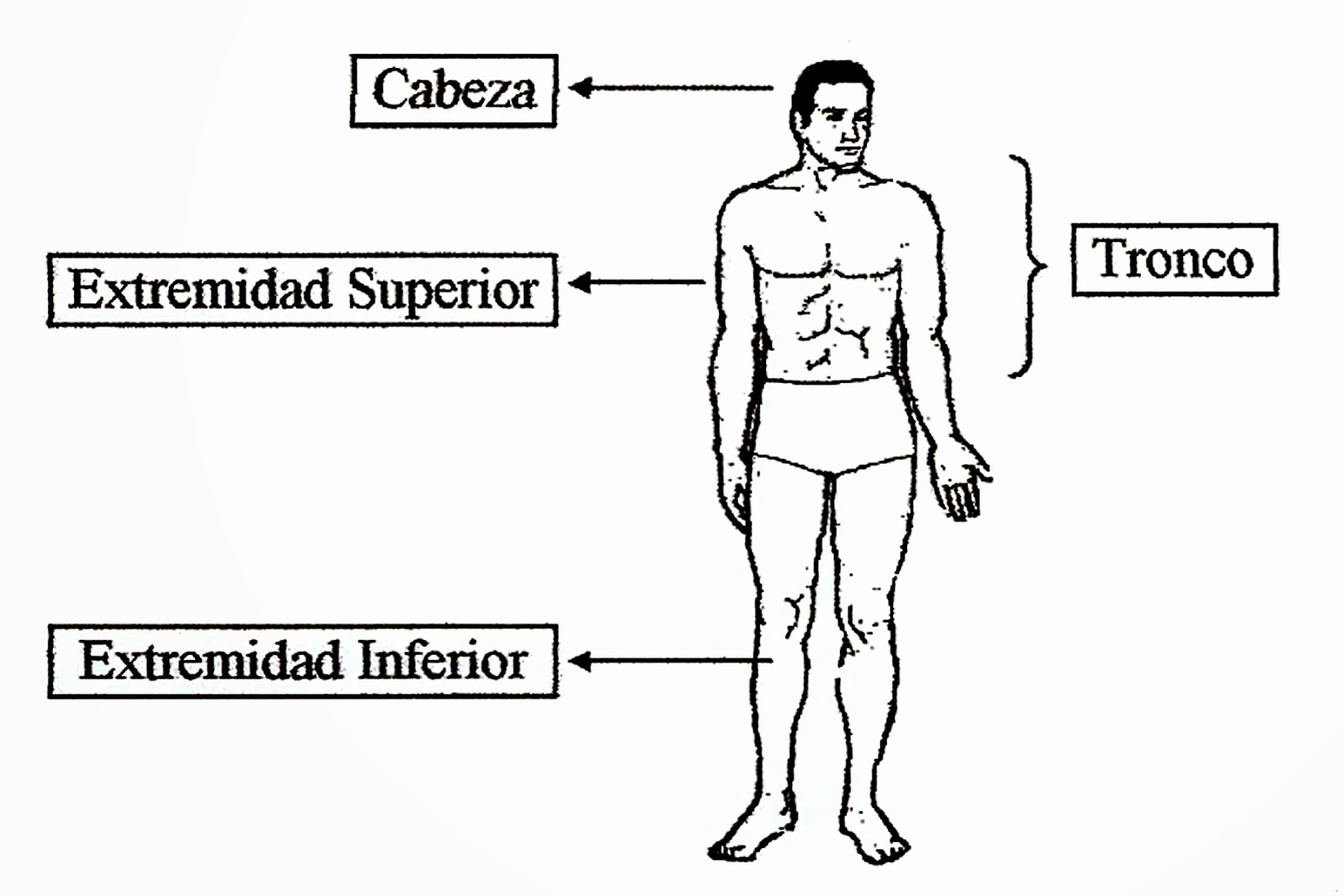 Escuela de Educación Secundaria N° 177: El Cuerpo Humano