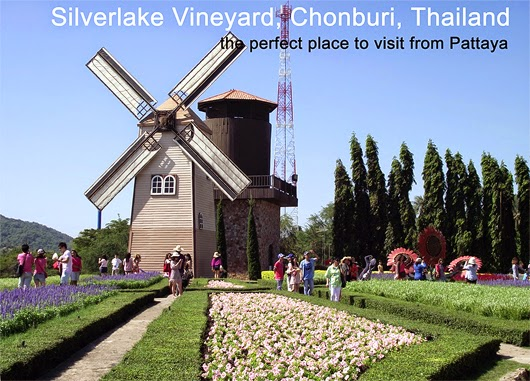 Silver-Lake-Grape-Farm-Pattaya