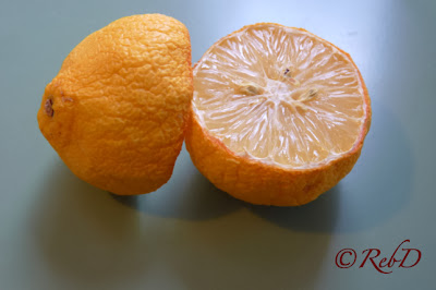 Ituskuren citron. Eller calamondin? foto: Reb Dutius