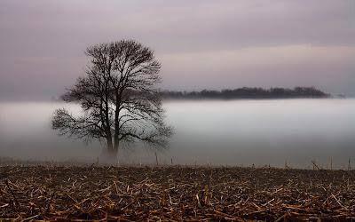 Foto Pohon dan Kabut Keren