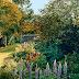 Garden Romance from Vogue