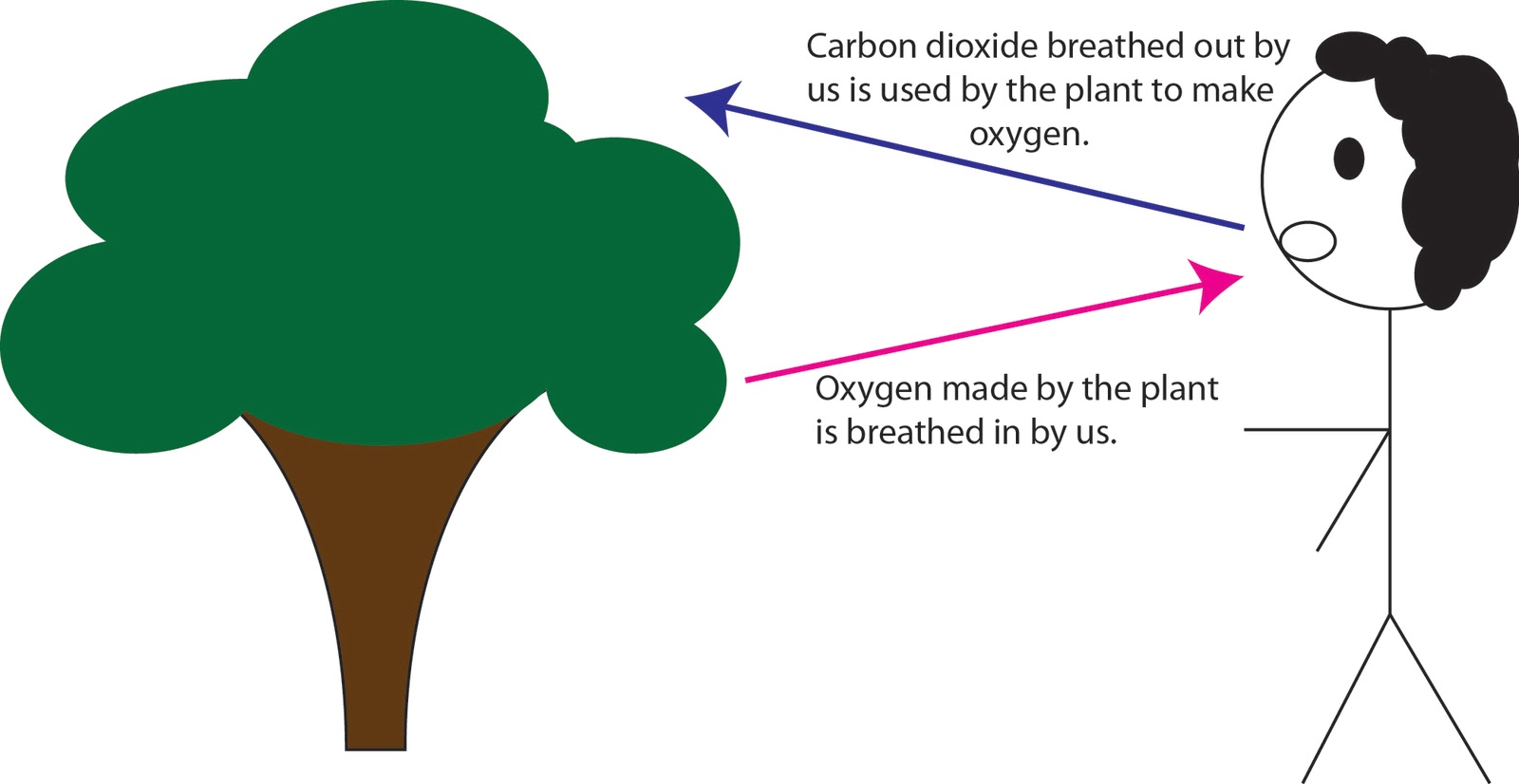 Oxygen And Carbon Dioxide Cycle Simple Abby's Aqua...