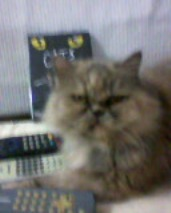 NANCY E O FILME 'THE CATS'