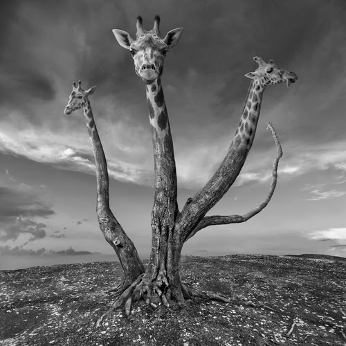 06-Giratree-Photographer-Dariusz-Klimczak-Surreal-Dream-World-www-designstack-co