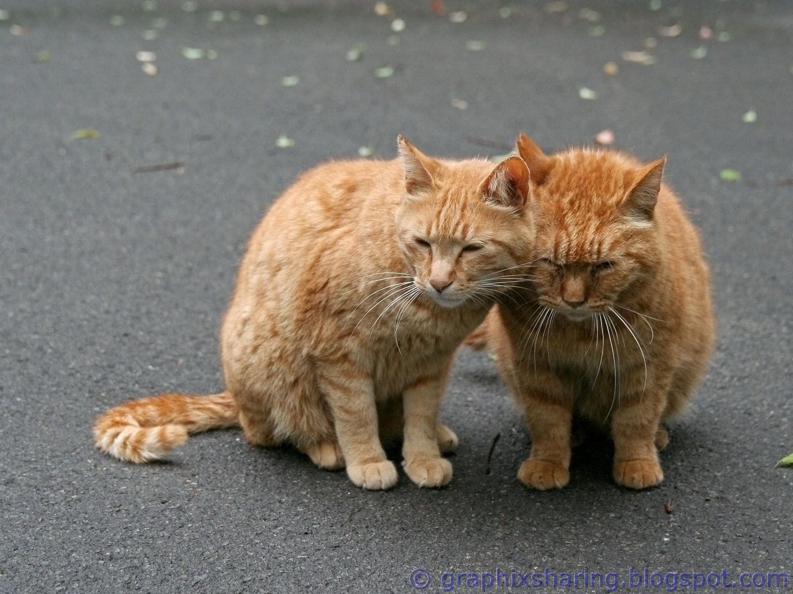 http://3.bp.blogspot.com/-gx0ratbh9Gw/TplQJRkbFMI/AAAAAAAAALg/TGawExTbqXM/s1600/Funny+Cats+Wallpapers+%252813%2529.jpg