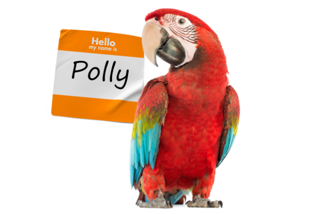 how tall is polly parrot