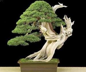 """<img src=""""bonsai8.jpg"""" alt=""""foto bonsai"""">"""