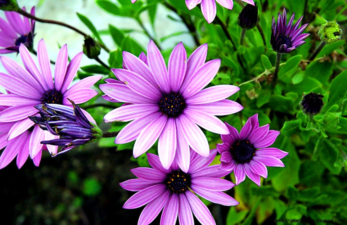 Purple Spring Flowers Names Amazing Wallpapers
