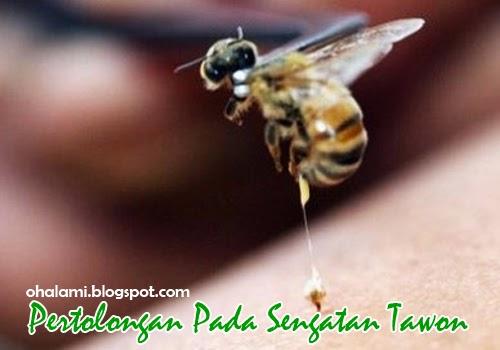 Cara Mengobati Serta Pertolongan Pertama Pada Sengatan Lebah (Tawon)