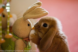 Bunny and toy.