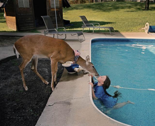 Animal Affinity series by Robin Schwartz