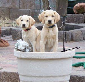 Bronko & Lucy-10 weeks