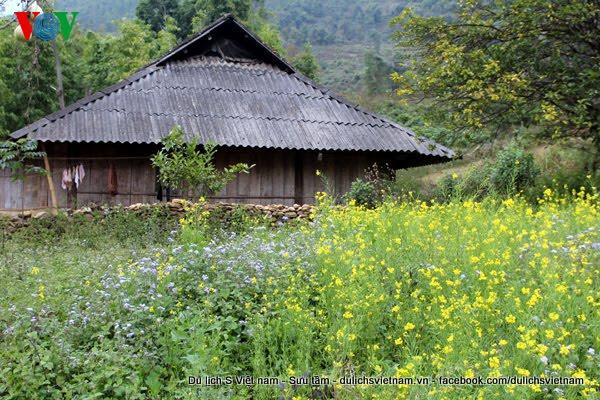 flowers blossoming in northwestern region of Vietnam